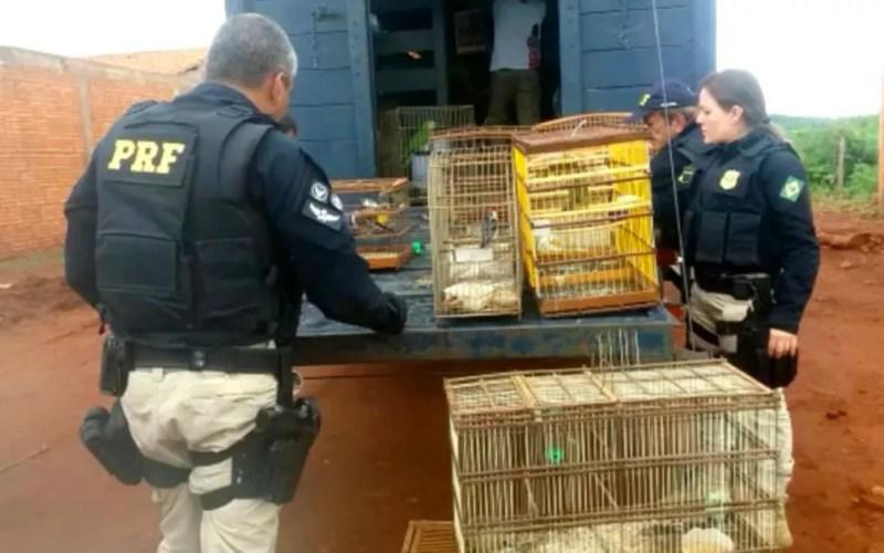 Animais foram avaliados e tratados por equipes de veterinários e biólogos, e alimentados — Foto: Divulgação/Polícia Rodoviária Federal