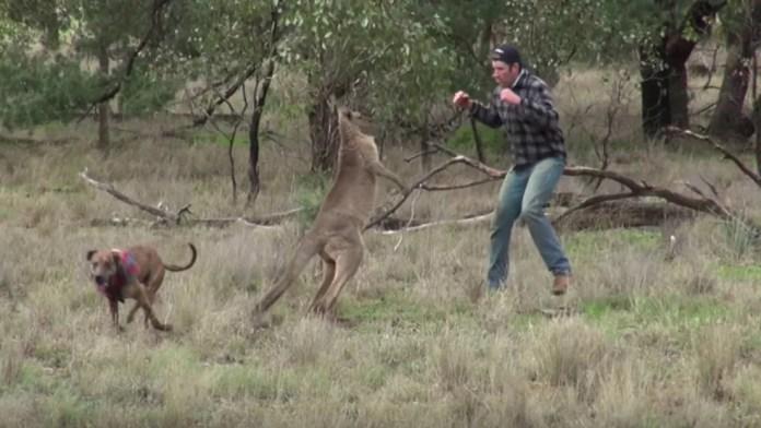Greig Tonkins encarou canguru para salvar cão que havia sido capturado pelo mamífero marsupial (Foto: Greg Bloom/Viralhog/YouTube)