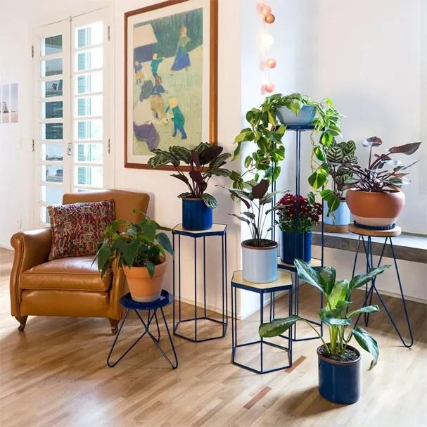 Resultado de imagem para plantas em casa