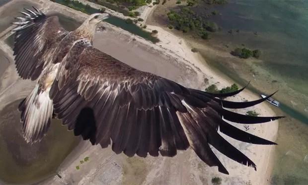 Um novo concurso de fotografia promovido pela National Geographic reuniu imagens deslumbrantes registradas por drones - veículos aéreos não tripulados. A foto que venceu a competição retrata o voo de uma águia sobre o parque nacional Barat, em Bali, na Indonésia.  (Foto:  Dronestagram/BBC)