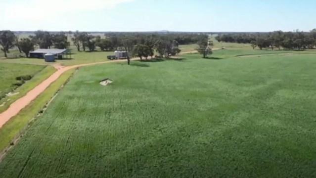 Os campos no sudeste da Austrália se recuperaram da seca e acabaram fornecendo comida para roedores — Foto: BBC