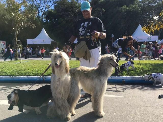 Cães das raças basset e afghan hound na Caminhada do Amicão em Resende (Foto: Maria Clara Jordão/TV Rio Sul)
