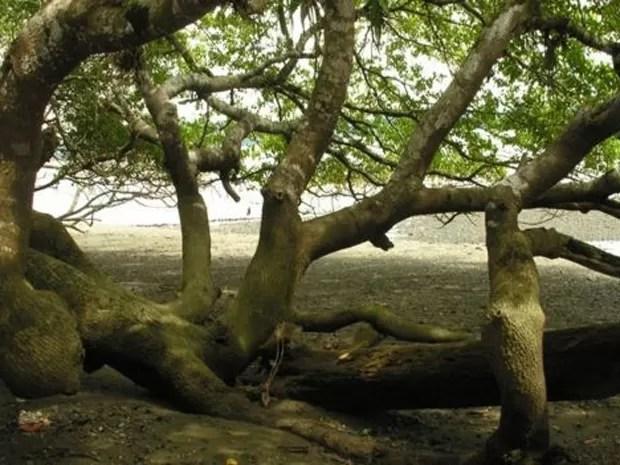Sombra da árvore pode te convidar para um descanso, mas ficar embaixo dela é perigoso (Foto: Reinaldo Aguilar/Flicker via freeforcommercialuse)