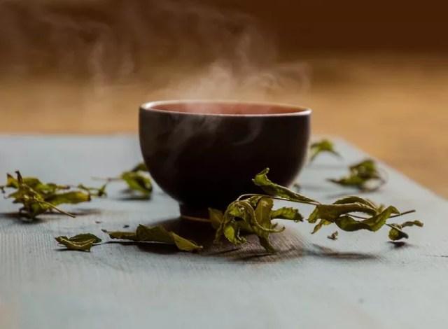 O chá verde é feito com a planta Camellia sinensis (Foto: Pixabay/TeeFarm/CreativeCommons)