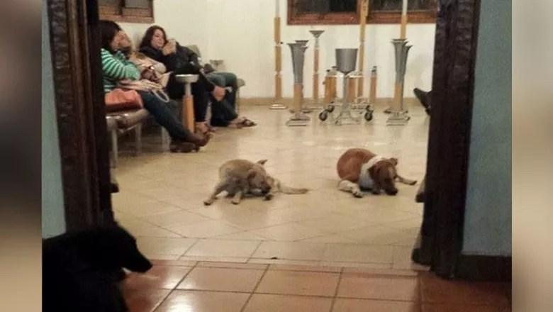 cachorros_mexico_funeral (Foto: Reprodução)