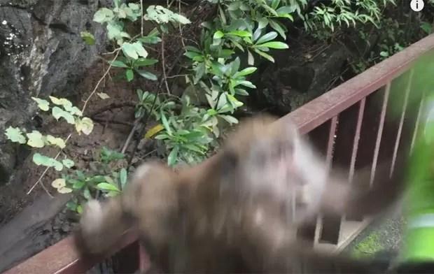 Macaca saltou e arrancou lata de batatas das mãos de turista (Foto: Reprodução/YouTube/Liliana Corona)