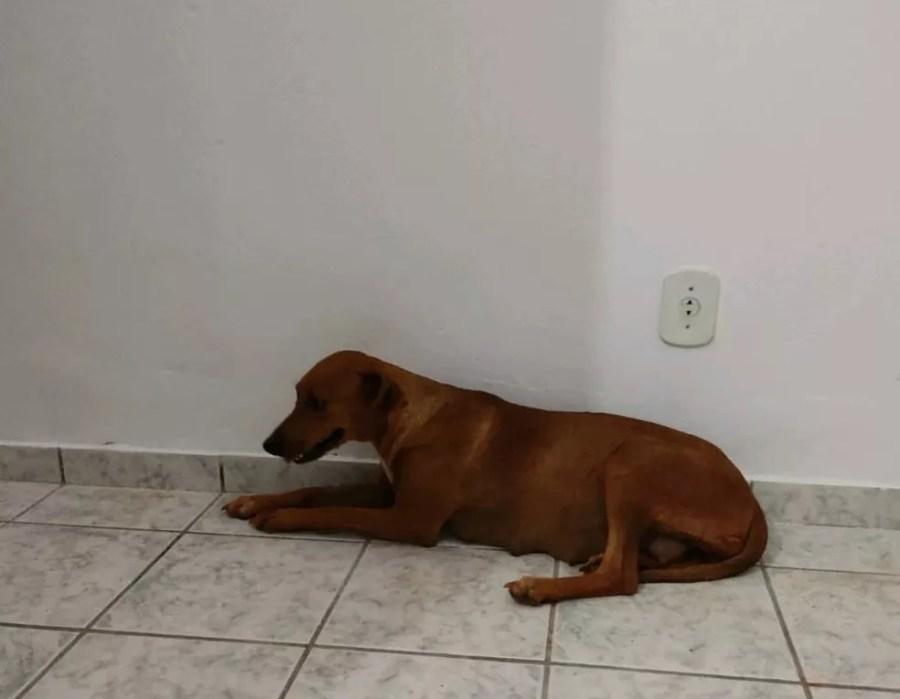 Cadela abandonada foi levada para clínica veterinária, onde recebeu tratamento — Foto: PMA/DIvulgação