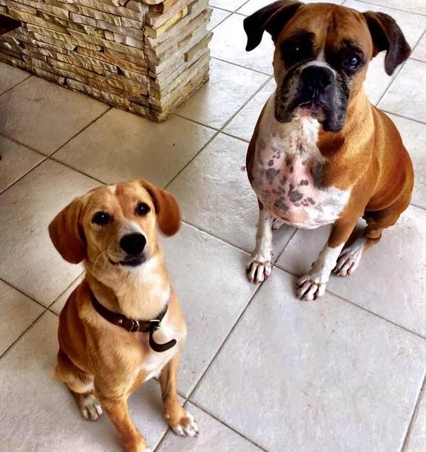 Cachorrinhos de Paola (Foto: Reprodução/Instagram)