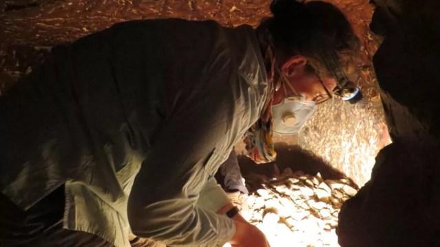 A pesquisadora Ivana Wolff identificando material escavado dentro da tumba (Foto: Divulgação)