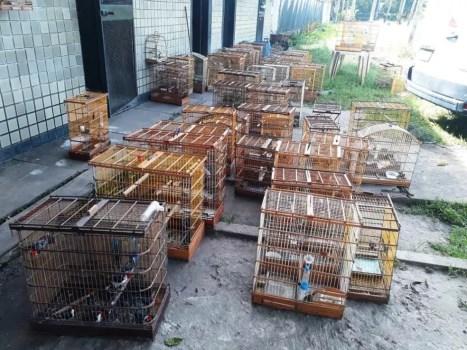 76 pássaros são apreendidos em Angelim, no Agreste de Pernambuco (Foto: Centro de Triagem de Animais Silvestres de Pernambuco/ Divulgação )