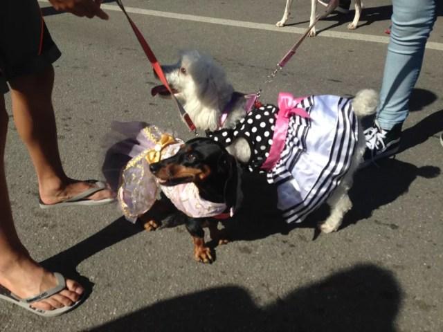 Vestidinhos com laços foi opção de muitos proprietários na Caminhada do Amicão em Resende (Foto: Isabel Sodré/Arquivo Pessoal)