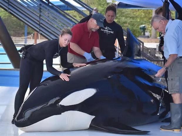 Tratadores e veterinários do SeaWorld cuidam de Unna (Foto: Reprodução/Facebook/SeaWorld)