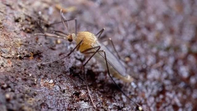 Mosquitos em túneis de diferentes linhas no metrô de Londres são geneticamente diversos — Foto: MARTIN DOHRN/SCIENCE PHOTO LIBRARY/BBC