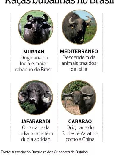 muçarela de búfala (Foto:  )