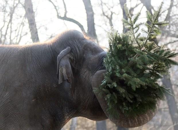 Resultado de imagem para elefante na árvore