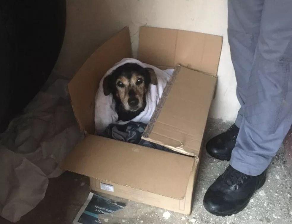 Bombeiros querem encontrar dono ou alguém que adote cachora resgatada (Foto: Divulgação/Corpo de Bombeiros)