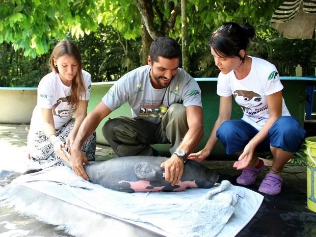 Animal foi resgatado no município de Anamã, à 165 km da capital (Foto: Jamile Alves/G1 AM)