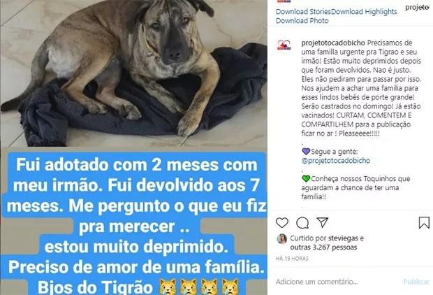 Claudia Ohana devolve cachorros adotados e web detona (Foto: Reprodução/Instagram)