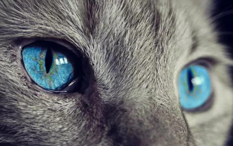 Para os gatos, os benefícios da vida em grupo não compensam ter que dividir comida (Foto: BBC/Pixabay)