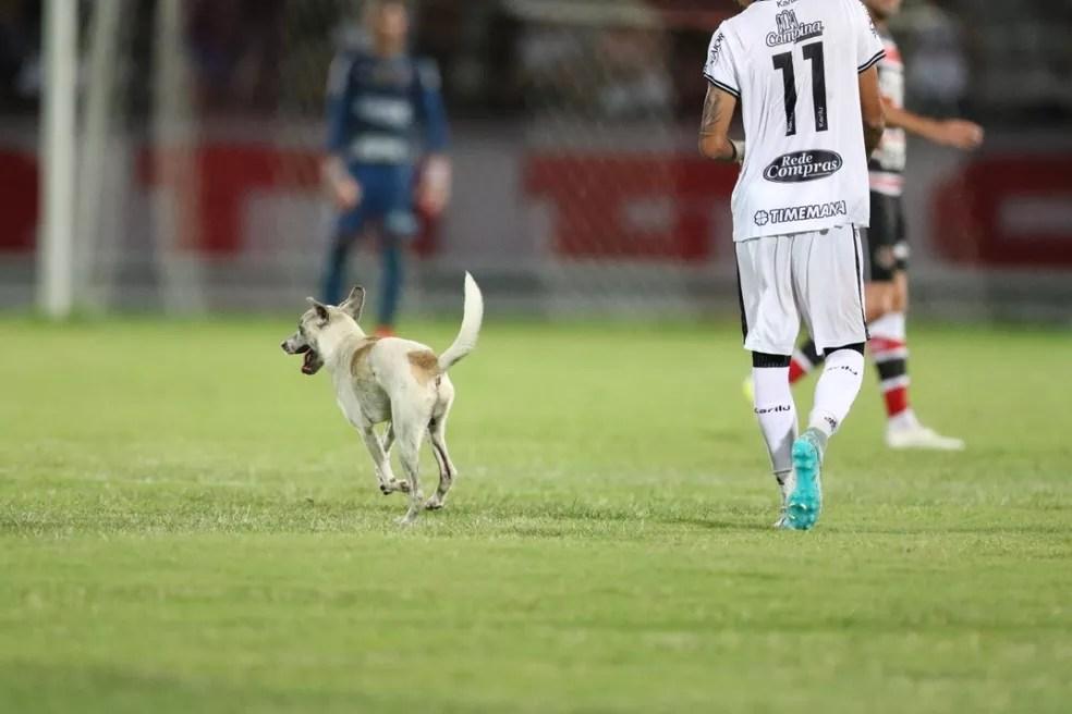 Cachorro entrou animado no gramado — Foto: Aldo Carneiro / Pernambuco Press