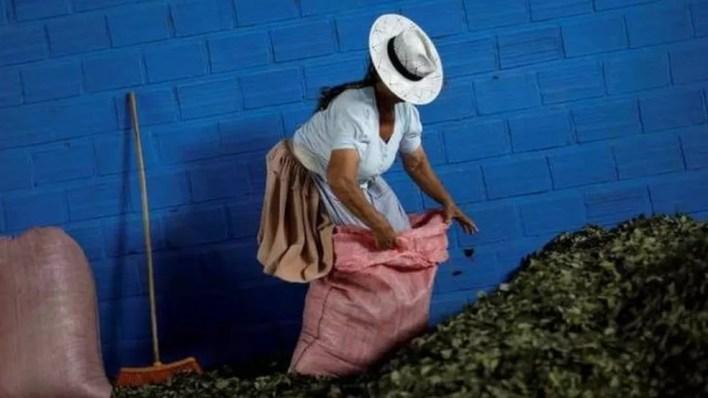 Vírus tem esse nome por causa da região boliviana de Chapare, conhecida também por sua produção cocaleira — Foto: Ueslei Marcelino/Reuters