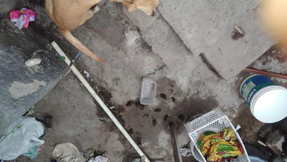 Casa onde a menina morava estava suja, com fezes e cheia de insetos, diz delegado (Foto: Polícia Civil/Divulgação)