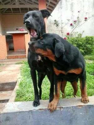 Ao lado do 'irmão', Valente está feliz com a nova família (Foto: Arquivo Pessoal / Thamiris Teodoro)