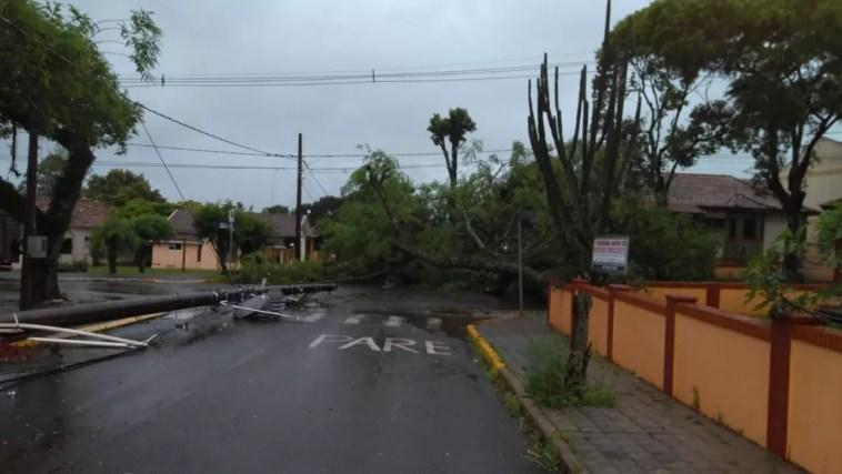 Xaxim registrou queda de árvores nesta quarta-feira — Foto: Defesa Civil/Divulgação