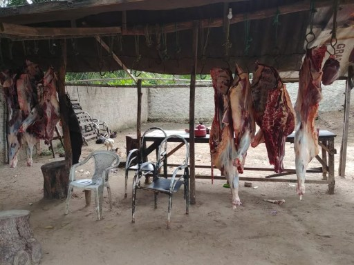 Policiais encontraram pedaços de animais pendurados em matadouro clandestino (Foto: Divulgação/PM)