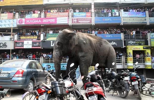 Cena aconteceu na cidade de Siliguri (Foto: Diptendu Dutta/AFP)