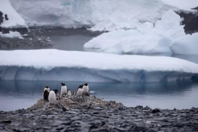 Pinguins na Antártica em foto de janeiro de 2015 — Foto: AP Photo/Natacha Pisarenko, File