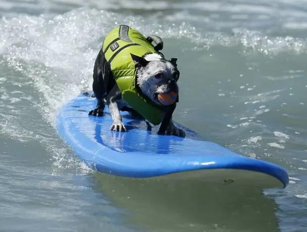 Cão mostra talento enquanto pega onda em praia da Califórnia. (Foto: Lucy Nicholson/Reuters)