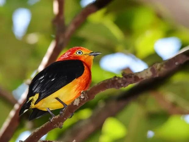 Resultado de imagem para pássaros e alimentos humanos