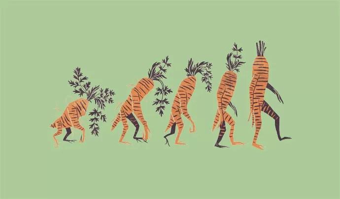 A EVOLUÇÃO DE UMA ESPÉCIE: A cenoura doce e alaranjada é resultado de anos de domesticação (Foto: André Ducci)