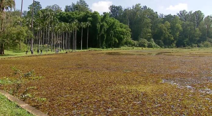 Floresta Estadual Edmundo Navarro de Andrade em Rio Claro (SP) (Foto: Reprodução/EPTV)
