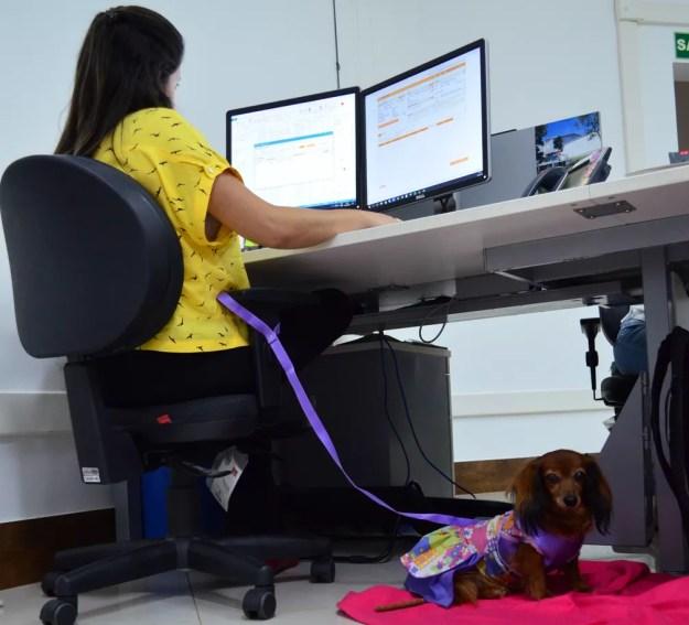 Funcionários podem levar animais para o trabalho em empresa de Descalvado (Foto: Fabiana Assis/G1)