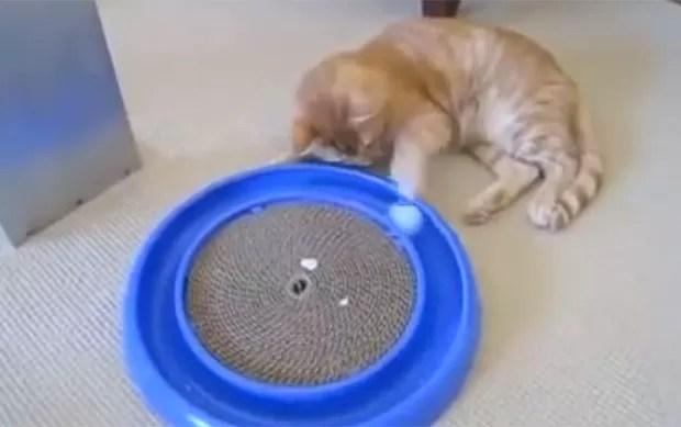 Vdeo de gato se divertindo com brinquedo faz sucesso na web (Foto: Reprodução/YouTube/Tenseventy)