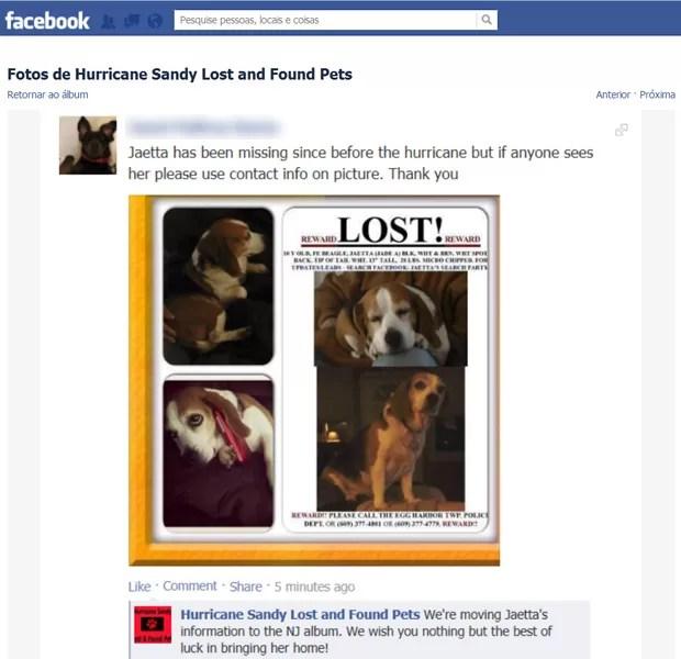 Anúncio de busca de beagle Jaetta, de 10 anos, desaparecida após supertempestade (Foto: Reprodução/Facebook)