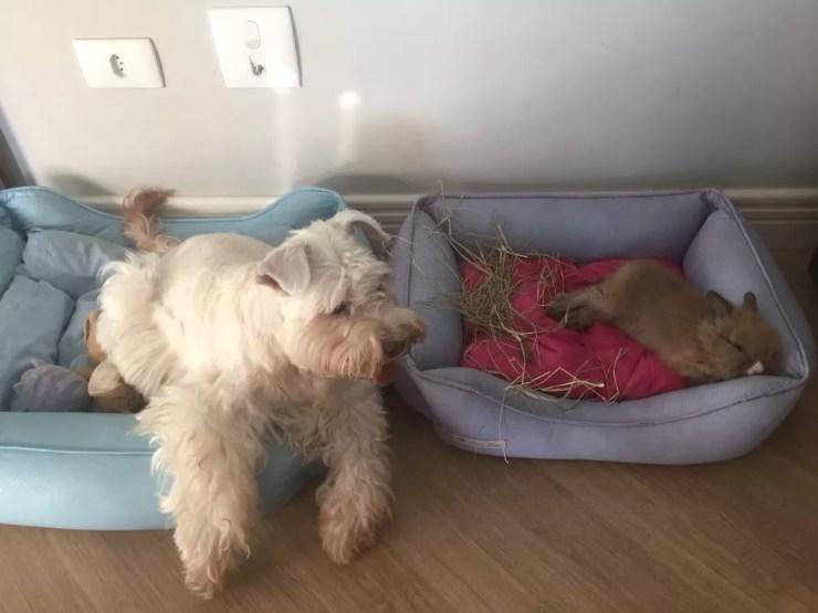 Tapioca e Cookie descansam uma do lado da outra (Foto: Arquivo pessoal)