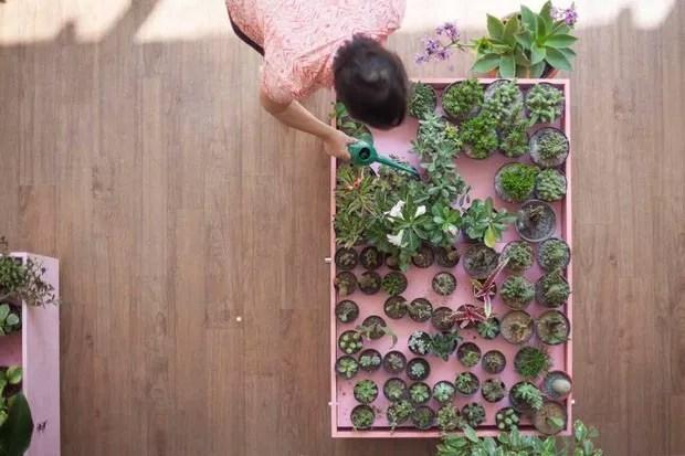 6 dicas básicas para cuidar das plantas no verão (Foto: Reprodução)
