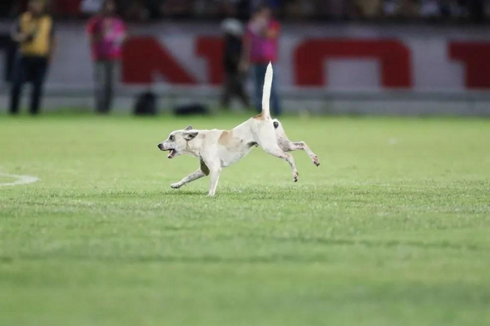 Animal levantou torcida do Santa Cruz — Foto: Aldo Carneiro / Pernambuco Press