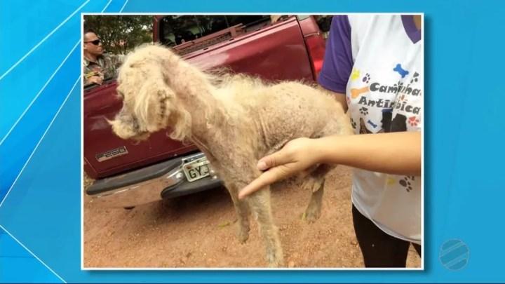 Os vizinhos acionaram o Centro de Controle de Zoonoses de Nova Andradina (MS) para resgatar o animal. — Foto: TV Morena/Reprodução