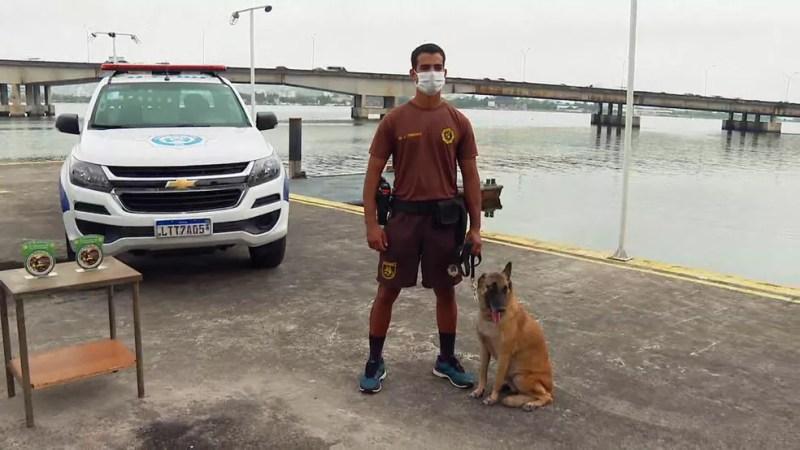 Cães da Guarda Municipal se aposentaram e buscam um lar — Foto: Reprodução/TV Globo
