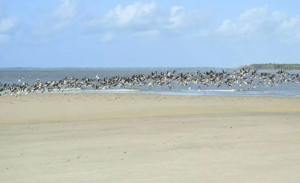 Situada no litoral norte de Viseu, a praia de Apeú é praticamente deserta. (Foto: Fábio Soares/ Divulgação Prefeitura de Viseu)