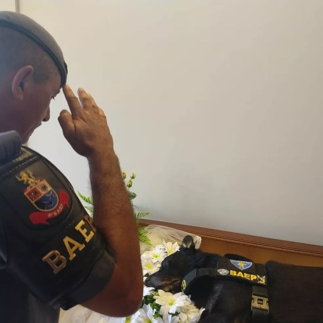 Cachorro Irak foi cremado e as cinzas ficaram no memorial do cemitério — Foto: Divulgação/Polícia Militar