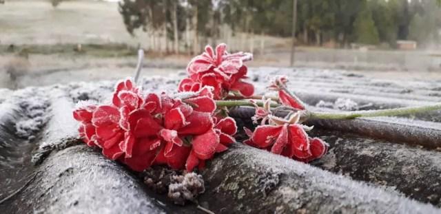 Município de Ciríaco amanheceu com geada — Foto: Juliano Simioni/arquivo pessoal