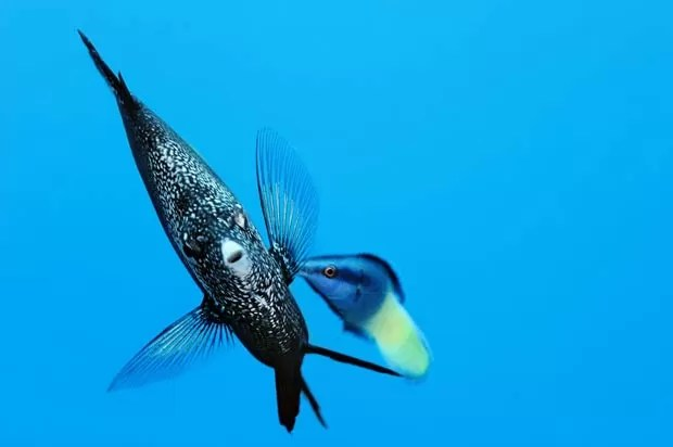 Brian Skerry se considera 'um explorador do oceano'. (Foto: Brian Skerry/Caters)