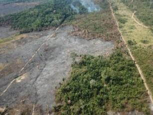 Satélite identificou área de desmatamento em RO — Foto: PF/Reprodução
