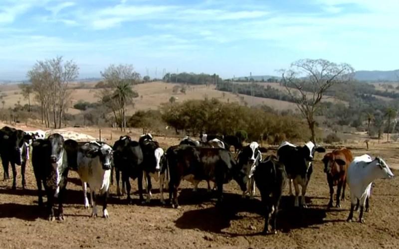 Geada prejudica produção de leite no Sul de Minas — Foto: Reprodução/EPTV