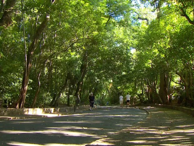Resultado de imagem para Bosque dos Jequitibás com chuva